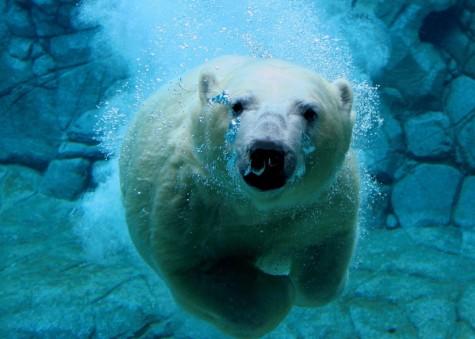 Oregon Polar Plunge