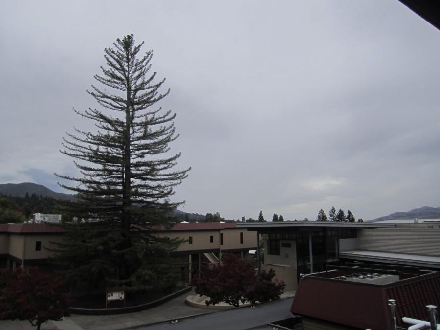 The Mystery Tree of Ashland High School