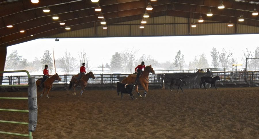 Solyana Caruso & Thumper, Sutton Guyer & Lady, Paige & Inde