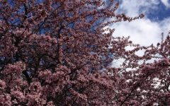 Three Simple Steps to a Perfect Spring Garden