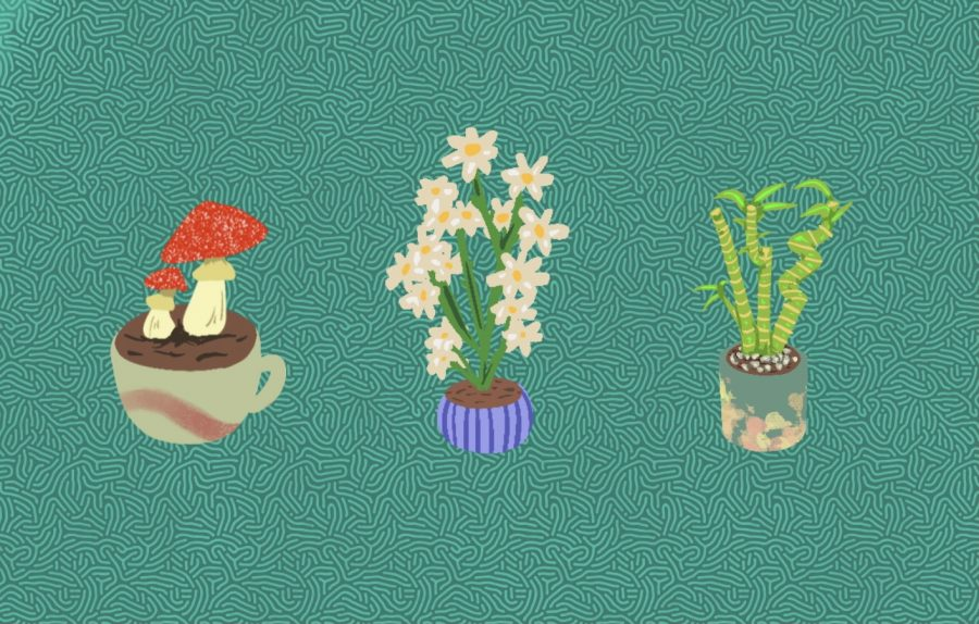 Flora-Scopes